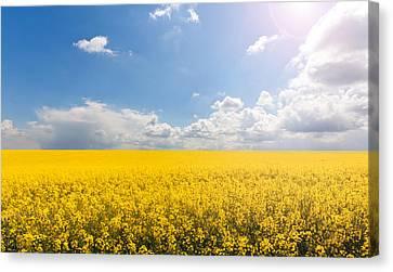 Endless Yellow Canola Field Canvas Print by © Bjorn van der Meijs