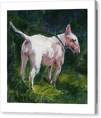 English Bull Terrier Canvas Print by Chris Pendleton