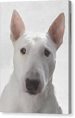 English Bull Terrier Canvas Print by JG Keevil