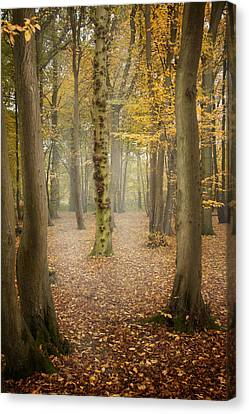 Canvas Print featuring the photograph English Forest In Autumn by Ethiriel  Photography