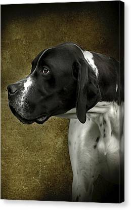 Canvas Print featuring the photograph English Pointer Dog Portrait by Ethiriel  Photography