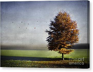 Enjoying The Autumn Sun Canvas Print by Hannes Cmarits