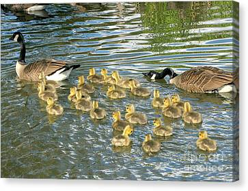 Enouth With The Fertility Pills Canvas Print by Frank Townsley