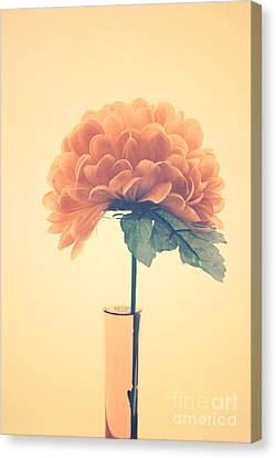 Estillo - 01i2 Canvas Print by Variance Collections