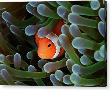Eternal Theme Canvas Print by Nature, underwater and art photos. www.Narchuk.com