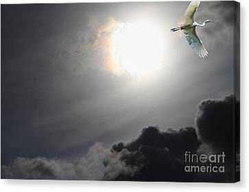 Eternity Canvas Print by Wingsdomain Art and Photography