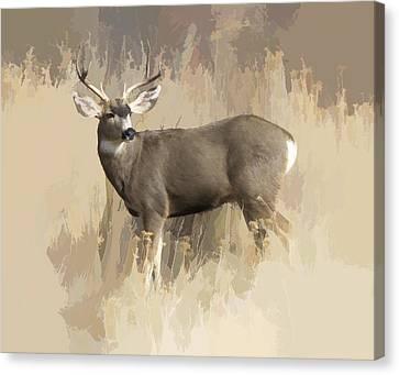 Evening Buck Canvas Print