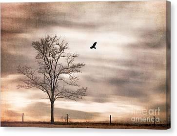 Evening Flight Canvas Print by Darren Fisher