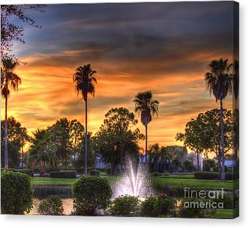 Evening Palms Canvas Print by Anne Raczkowski
