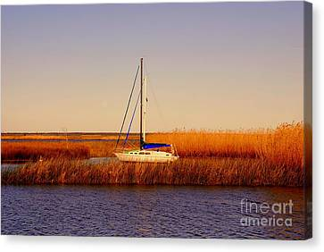 Evening Peace Canvas Print by Susanne Van Hulst