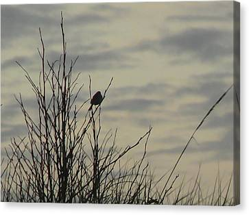 Evening Song Canvas Print by Pamela Patch