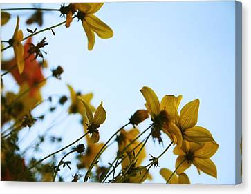 Every Sight And Every Sound Canvas Print by Laurie Search