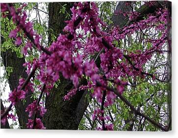Canvas Print featuring the photograph Everything Spring by Elizabeth  Sullivan