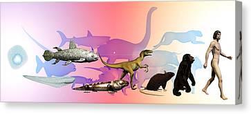 Evolution Of Man Canvas Print by Christian Darkin