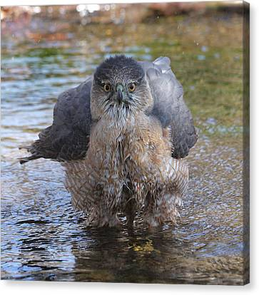 Excuse Me But I Am Bathing Here. Canvas Print