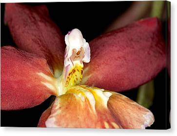 Canvas Print featuring the photograph Exotic Orchid Bloom by C Ribet