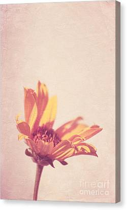 Expression - S07ct01 Canvas Print by Variance Collections