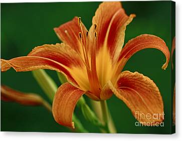 Expression Of Joy Canvas Print by Inspired Nature Photography Fine Art Photography