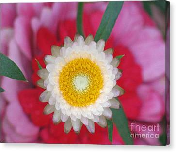 Canvas Print featuring the photograph Eye Candy Photography by Tina Marie