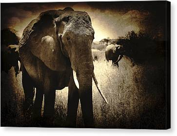 Eye Catching Moments Canvas Print by Jess Easter