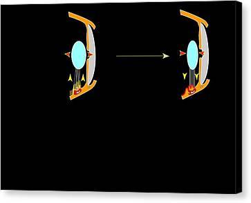 Eye Lens And Accommodation, Artwork Canvas Print by Francis Leroy, Biocosmos