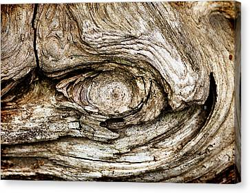 Eye Of Mystery Knot In Wood Canvas Print by Tracie Kaska
