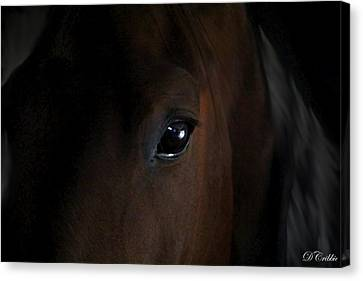 Eye Of The Beholder Canvas Print by Davandra Cribbie