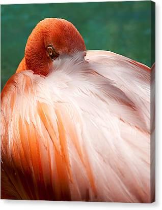Eye Of The Flamingo Canvas Print by Steven Heap