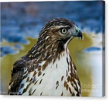 Canvas Print featuring the photograph Eye Of The Hawk by Mitch Shindelbower