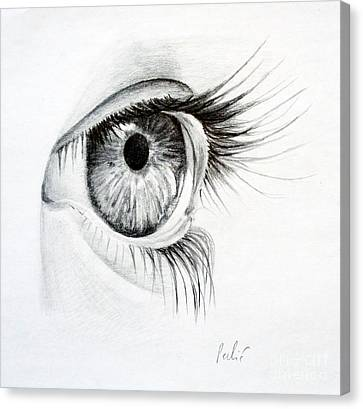 Canvas Print featuring the drawing Eye Study by Eleonora Perlic