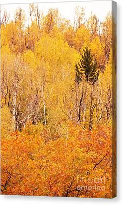 Eyeful Of Color Canvas Print by Bob and Nancy Kendrick