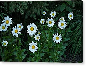 Canvas Print featuring the photograph Eyes by Joseph Yarbrough