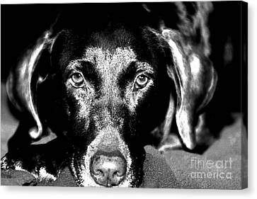 Canvas Print featuring the photograph Eyes by Leslie Leda