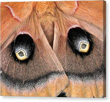 Eyes Of Deception Canvas Print by Peg Urban