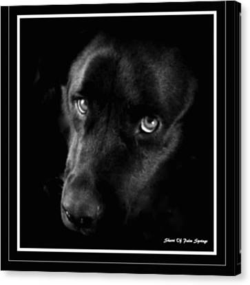 Eyes Of His Heart Canvas Print by Sherri's Of Palm Springs