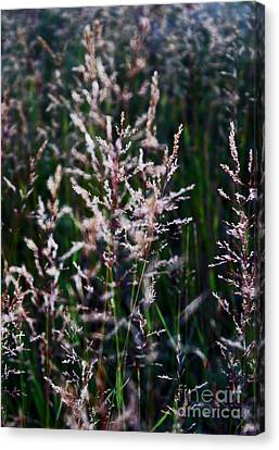 Faces In The Field Grass Canvas Print by Wesley Hahn
