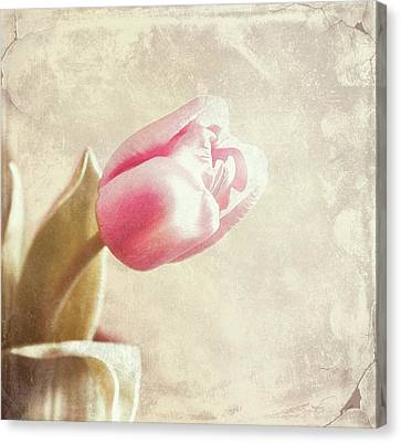 Faded By The Light Canvas Print by Cathie Tyler