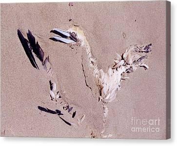 Fading Away Canvas Print by John Malone