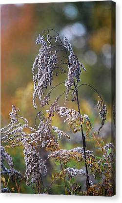 Fading Color Canvas Print by Kimberly Deverell