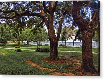 Fairhope Lower Park 2 Trees Canvas Print by Michael Thomas