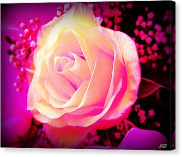 Canvas Print featuring the photograph Fairy Rose by Michelle Frizzell-Thompson