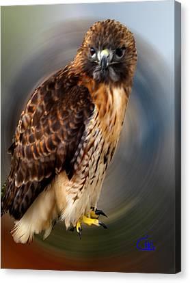 Falco 2 Tinnunculus Vf Canvas Print by Colette V Hera  Guggenheim