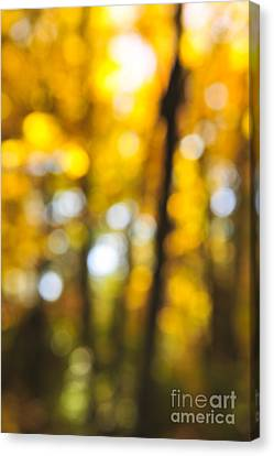 Fall Abstract Canvas Print by Elena Elisseeva