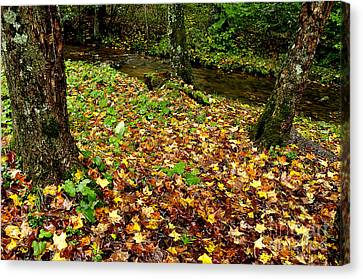 Fall Along Middle Fork Canvas Print by Thomas R Fletcher