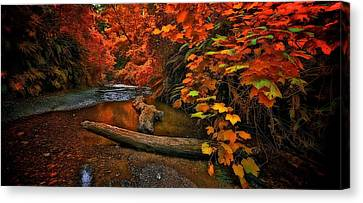 Canvas Print featuring the photograph Fall Along The Creek by Thomas Born