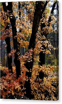 Fall Beckons  Canvas Print by Saija  Lehtonen