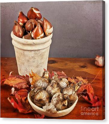 Canvas Print featuring the photograph Fall Bulbs 1 by Verena Matthew