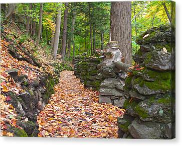 Fall Carpet Canvas Print