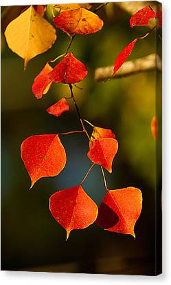 Canvas Print featuring the photograph Fall Color 2 by Dan Wells