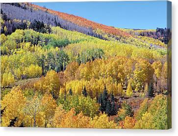 Fall Color Aspen Near Dolores Colorado Canvas Print